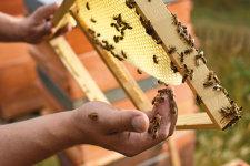Nur gesunde und starke Bienen stehen für einen reichhaltigen Honig © Sebastian Klein